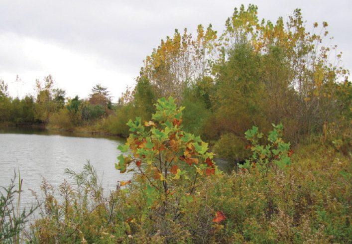 Cypress Meadow