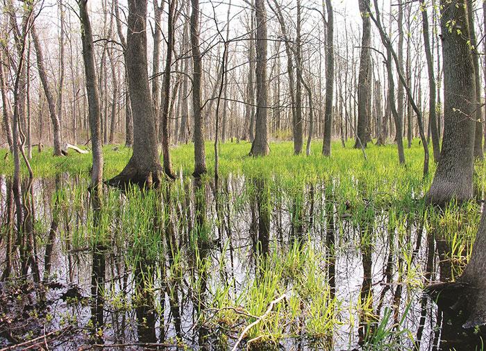 Art Hammer Wetlands