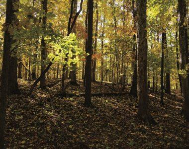 Lloyd W. Bender Memorial Forest
