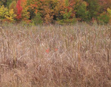 Glennwood Nature Preserve