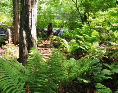 Spring Lake Woods and Bog