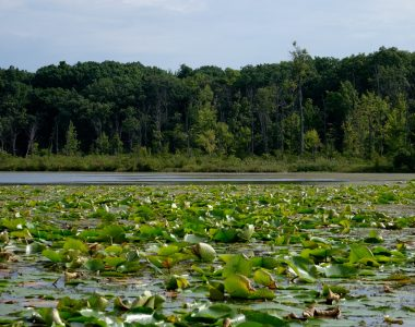 Challenging Steps Stewarding Land: Walking Quog Lake with Botanist Scott Namestnik