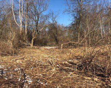A tale of two disturbances: surprises in land management
